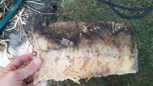 Lp siding rot repair Preferred Exteriors Vancouver WA Clark County