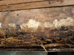 Best HardiPlank rot repair siding companies Vancouver WA Clark County